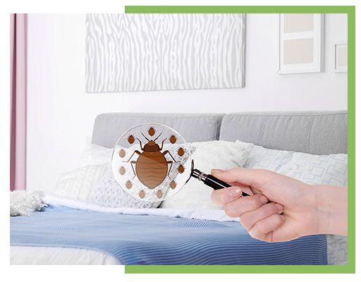 Bed Bug Removal Home Pest Control Solution