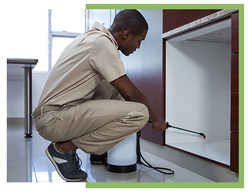 Pest Management for Your Business